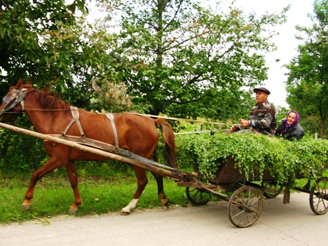 2 people carring grass from the field on the hourse cart