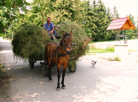 Man on the hourse cart, village of Stolniceni